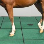 Yarış Atları Zemineleri-Zengerler